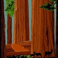 Redwoods Silkscreen by Jake Early | JakeEarly.com